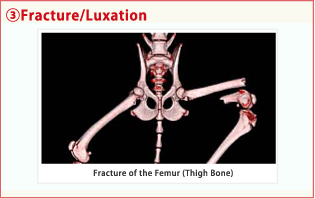 3.Fracture/Luxation