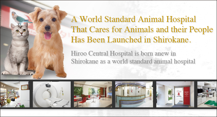 A World Standard Animal Hospital That Cares for Animals and their People Has Been Launched in Shirokane.